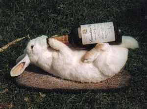 drunk-rabbit